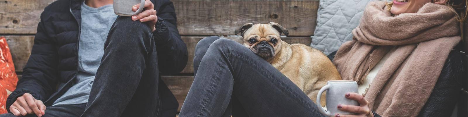 Stel met hond in lounge