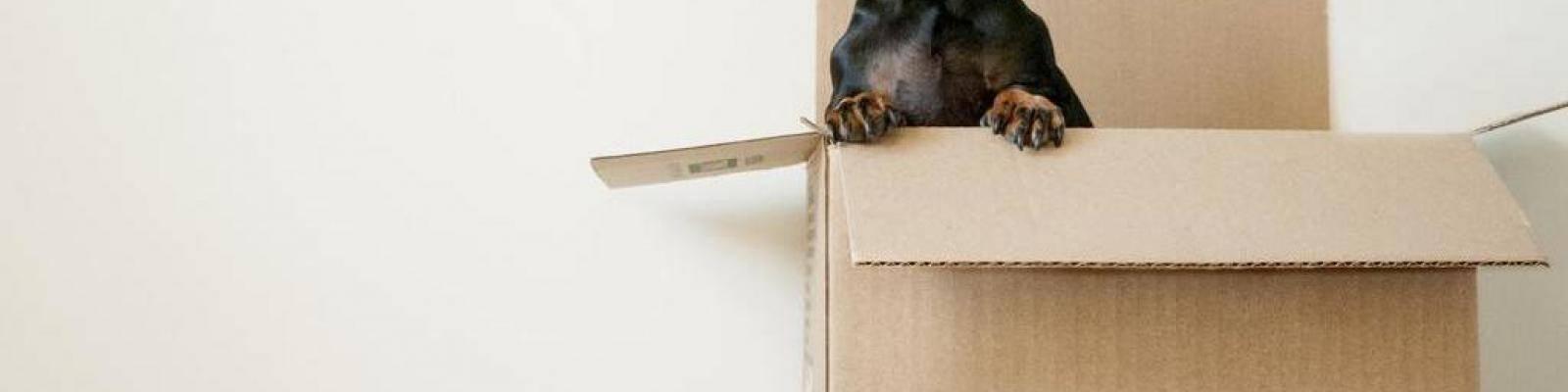 Hond in verhuisdoos